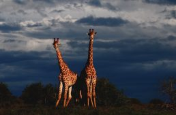 Soultravelling, turismo responsabile in Africa