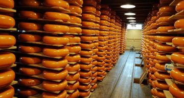 Olanda, tour nella valle del formaggio